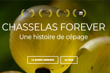 CHASSELAS FOREVER